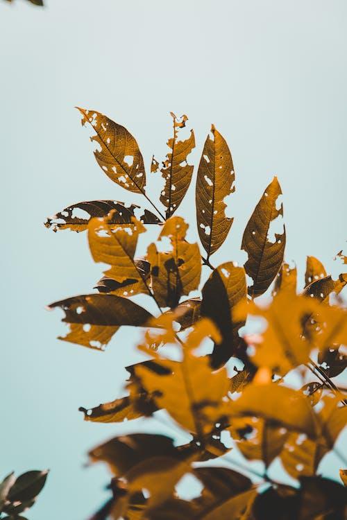 Foto stok gratis alam, alami, belukar