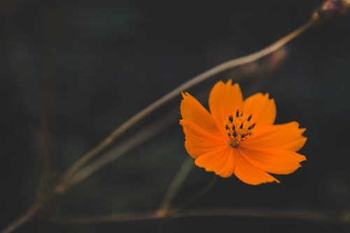 Closeup of blooming fresh orange flower growing on calm summer field in soft light