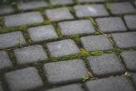 sidewalk, garden, moss