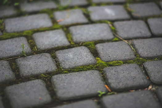 Paving stones with moss