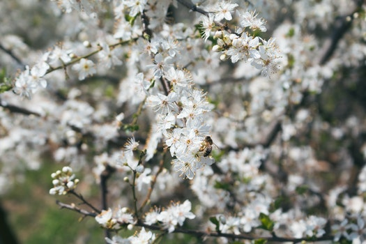 Free stock photo of sunny, animal, spring, tree