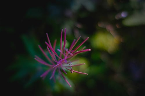 From above of delicate bright flower with long prickly petals growing in wild nature with green plants on blurred background
