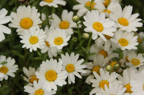 Základová fotografie zdarma na téma barva, bílá, flóra