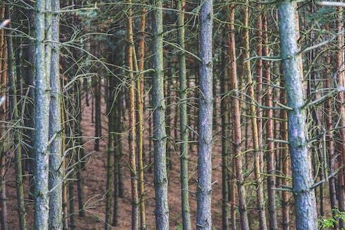 Photos gratuites de aboiement, arbre, aube, bois