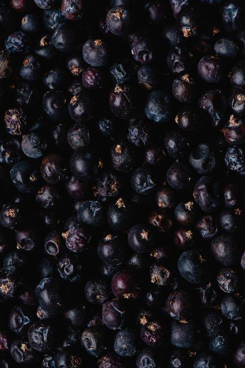 Základová fotografie zdarma na téma bobule, černá, detailní záběr