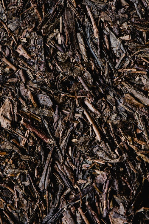 Brown and Black Dried Leaves