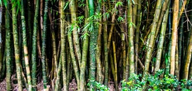 nature, forest, bamboo