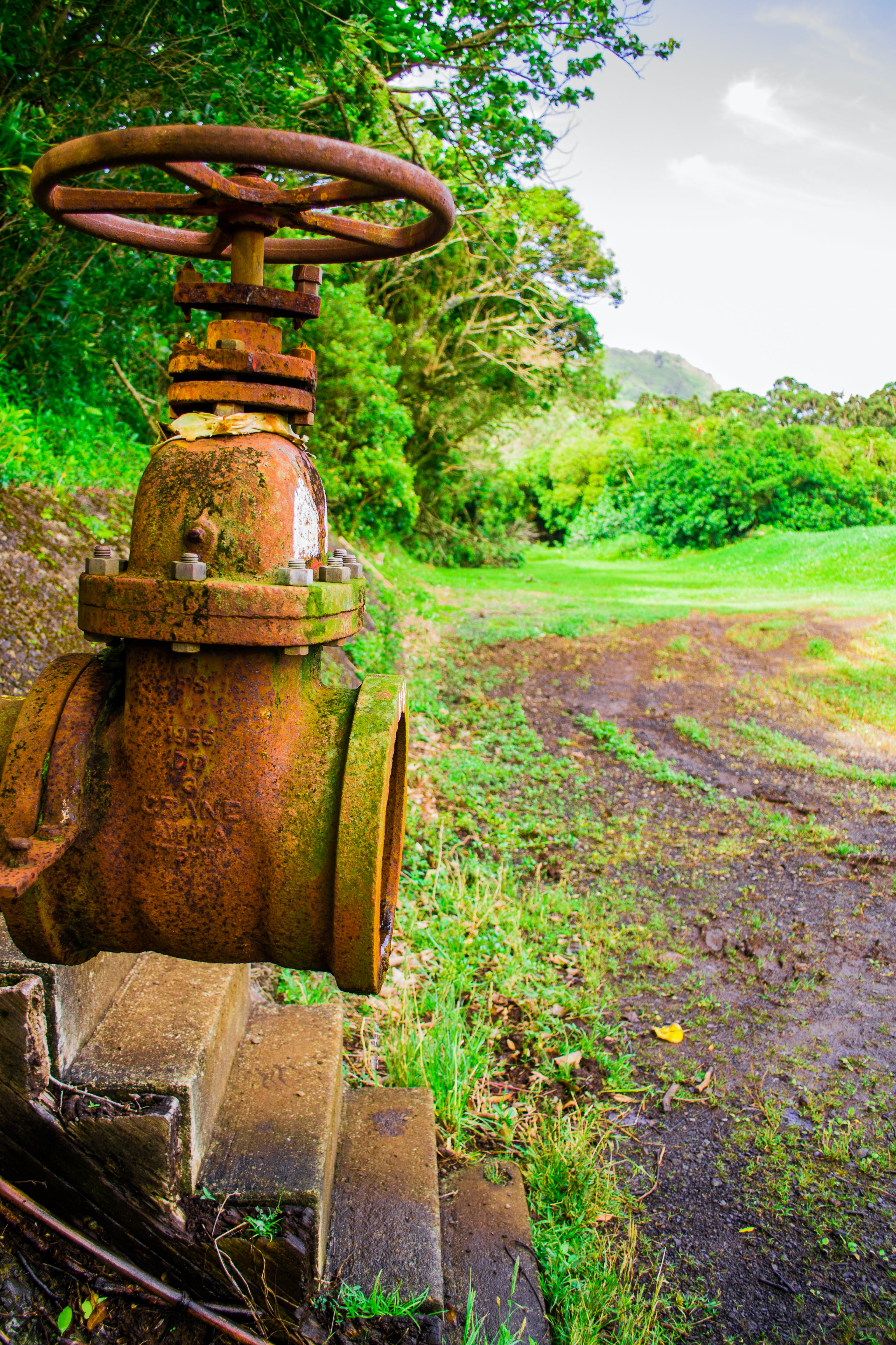 Free stock photo of hawaii, nature, pipe