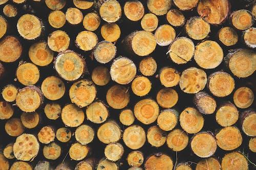 原本, 堆積木材, 木, 木材 的 免費圖庫相片