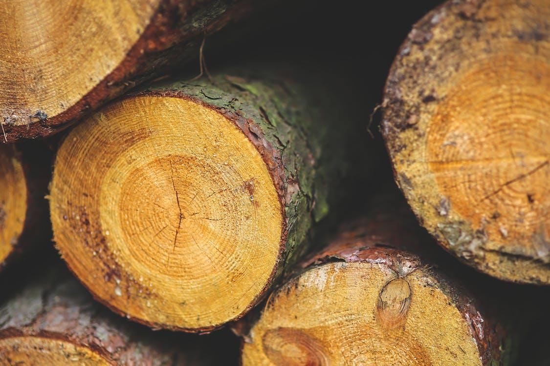 나무, 나무 줄기, 나무가 쌓여 있는