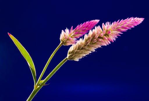 Purple flower free stock photo pink yellow and green flower mightylinksfo