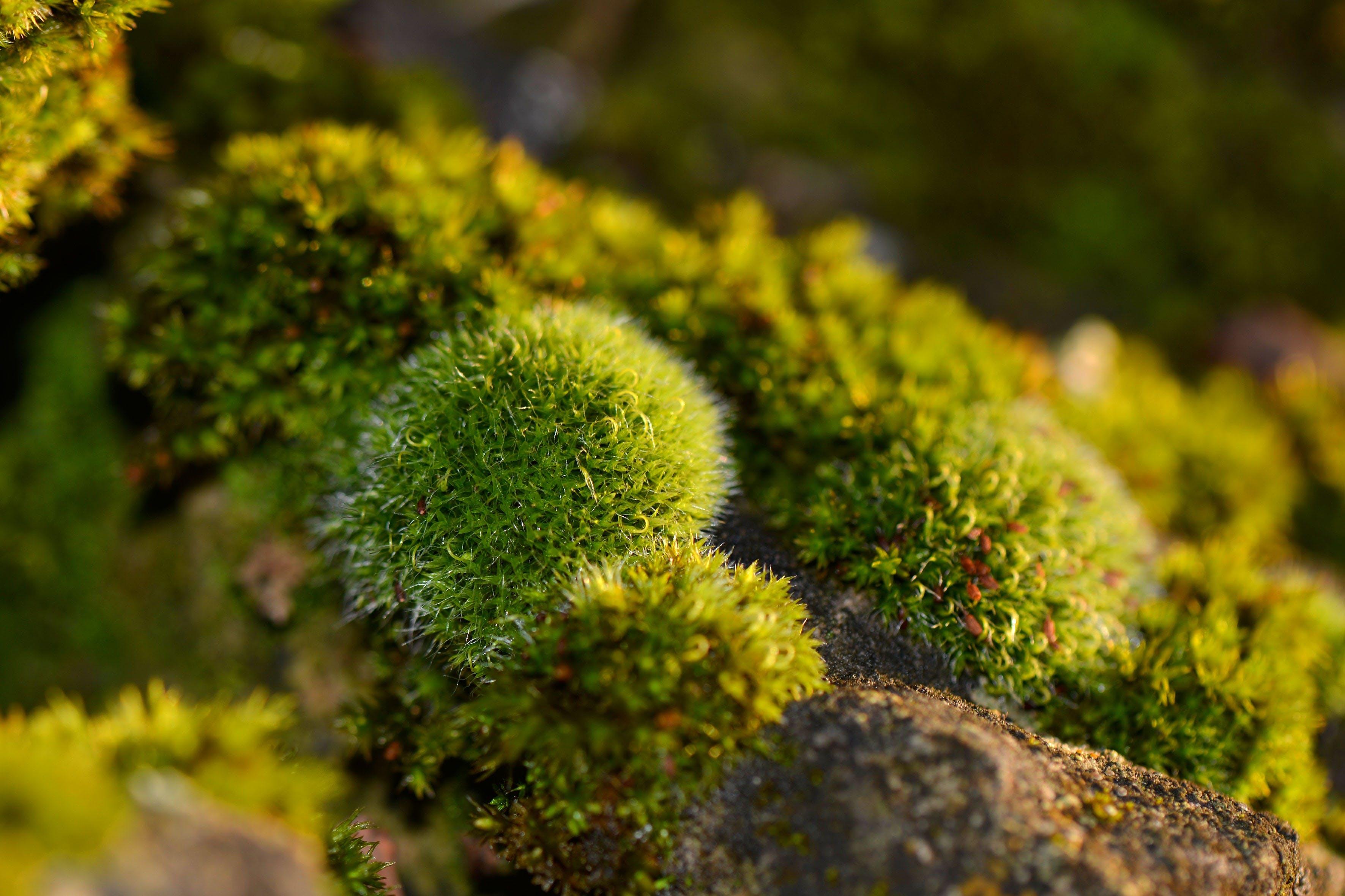 Kostenloses Stock Foto zu fels, grün, moos, natur