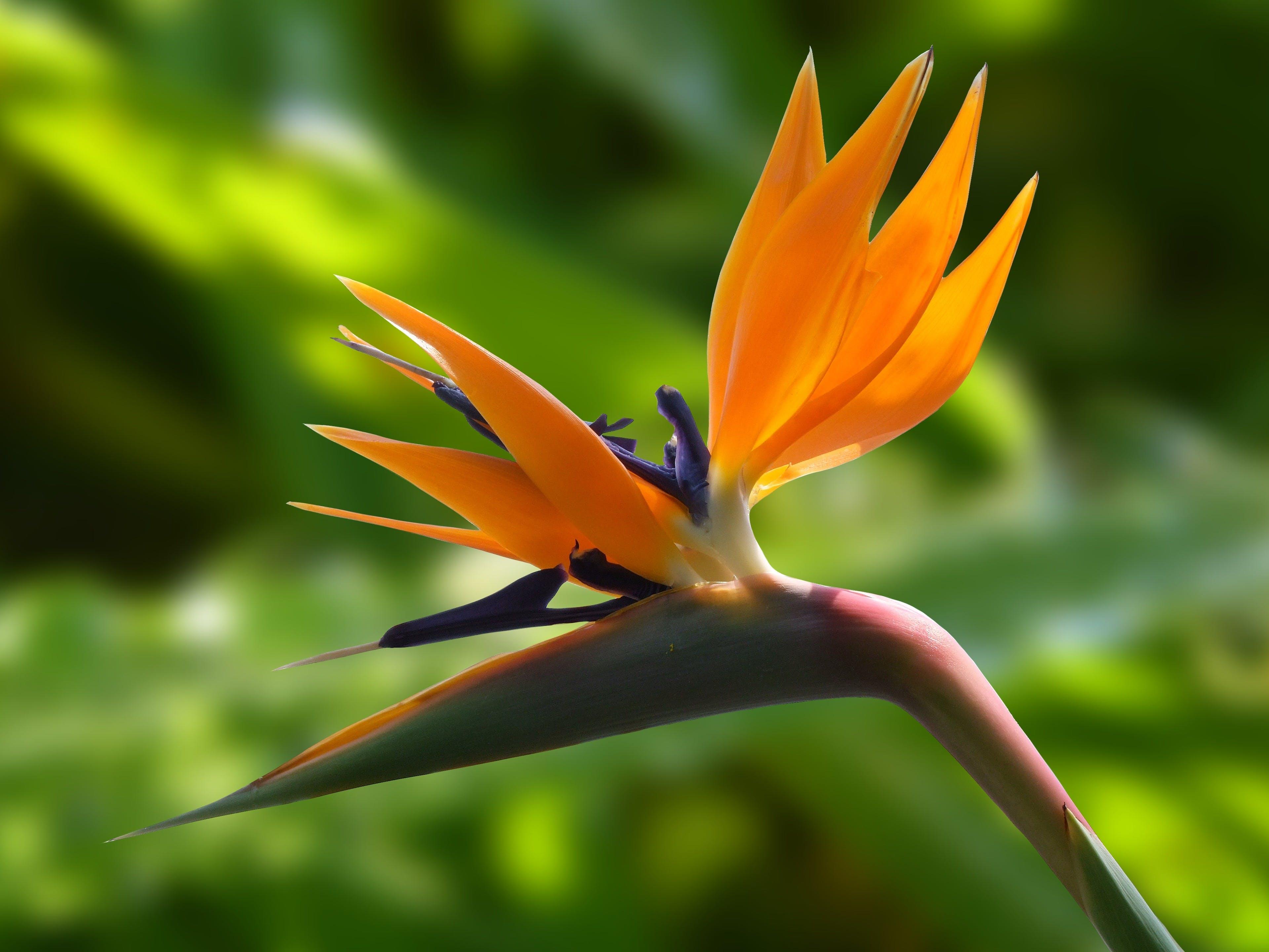 Macro Photography of Orange Flower