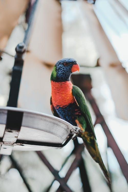 Blue Green and Orange Bird on Black Metal Bar