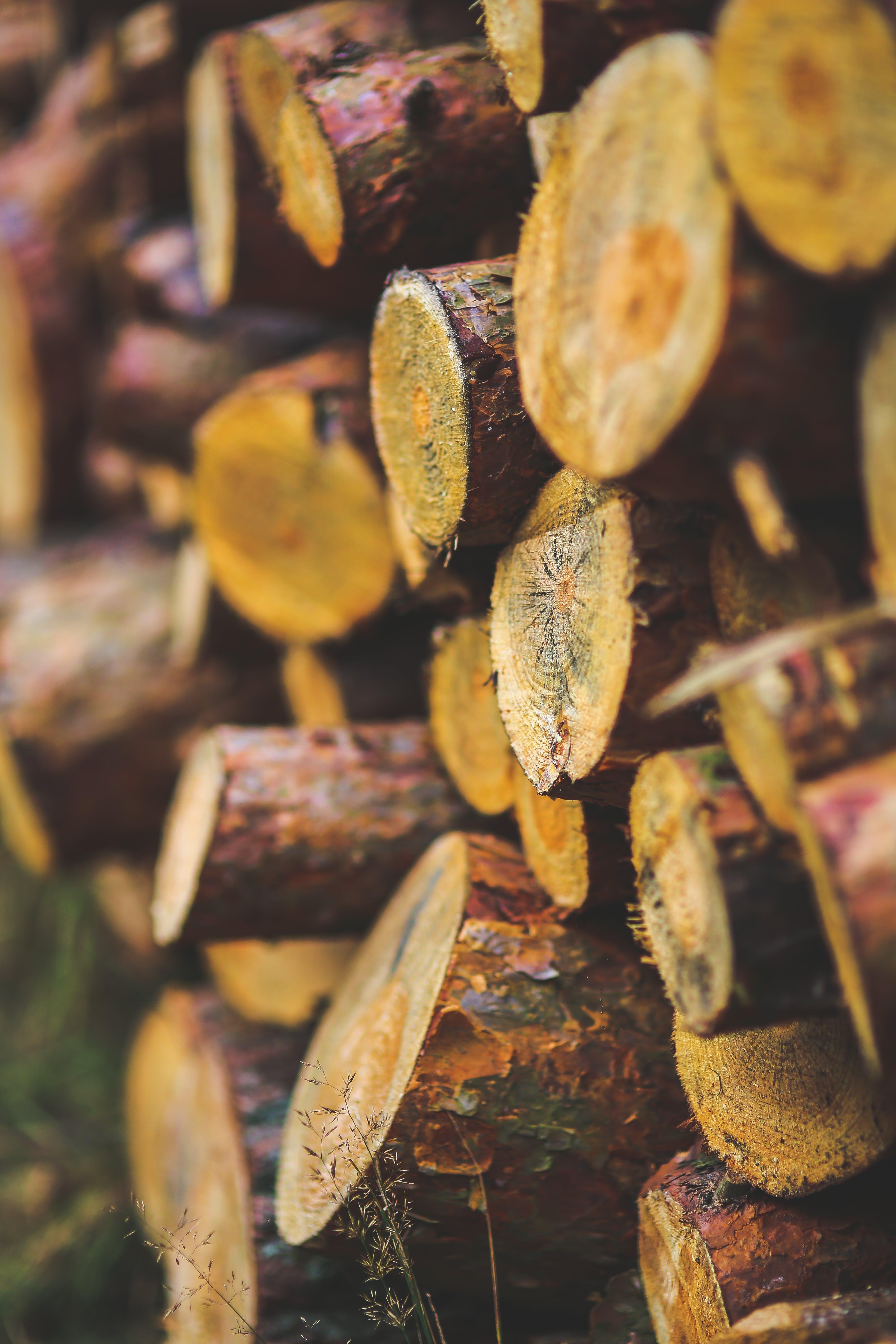 Kostenloses Stock Foto zu baum, essen, flora, frucht