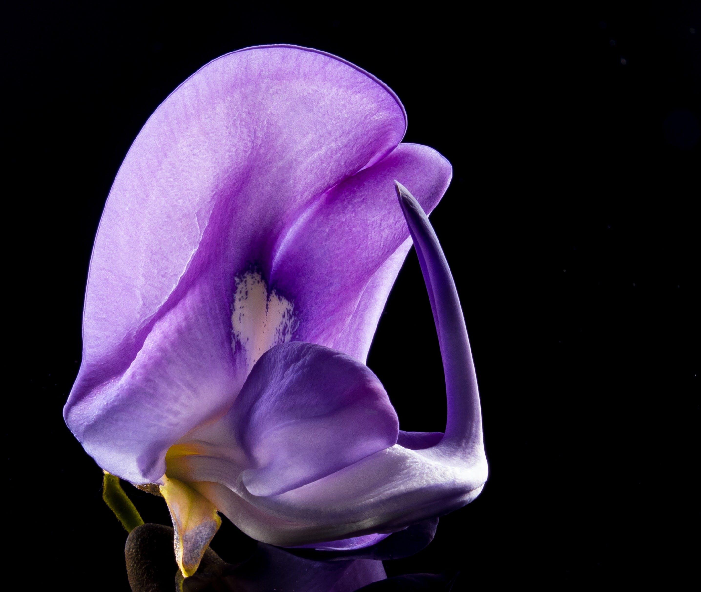 Purple Petal Flower