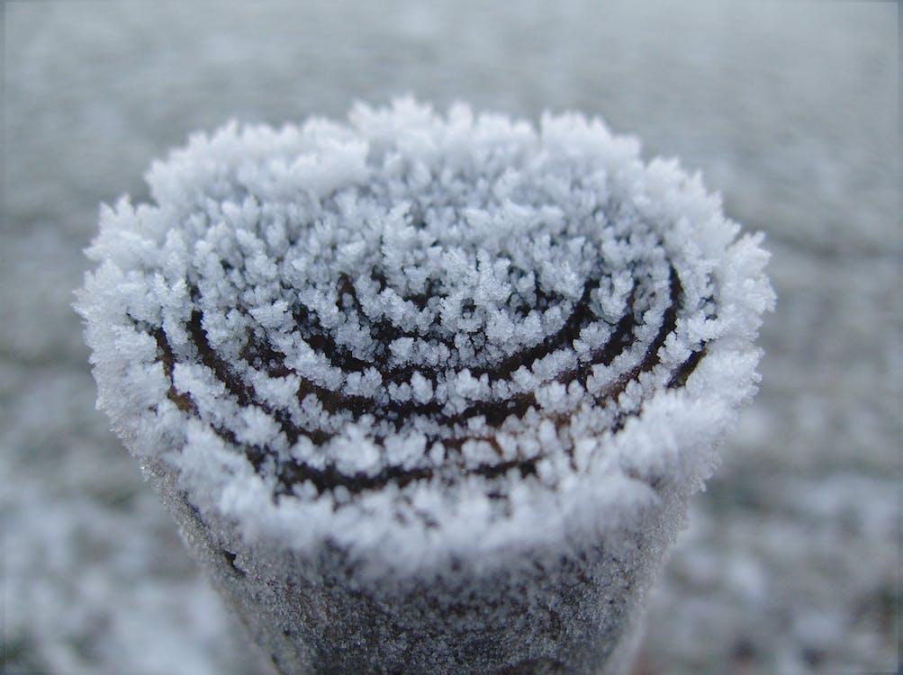 led, makro, mráz