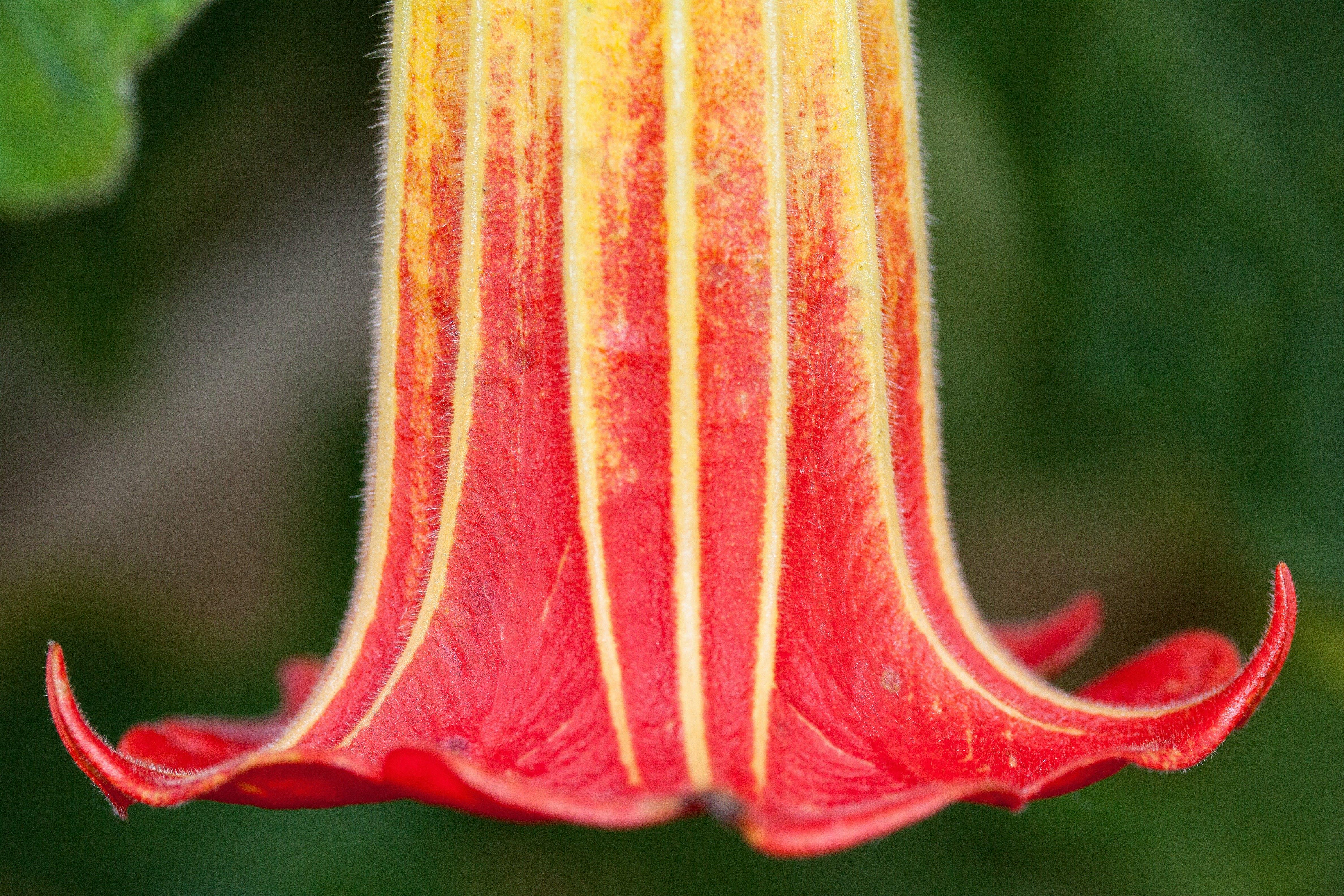 Red White Upside Down Flower
