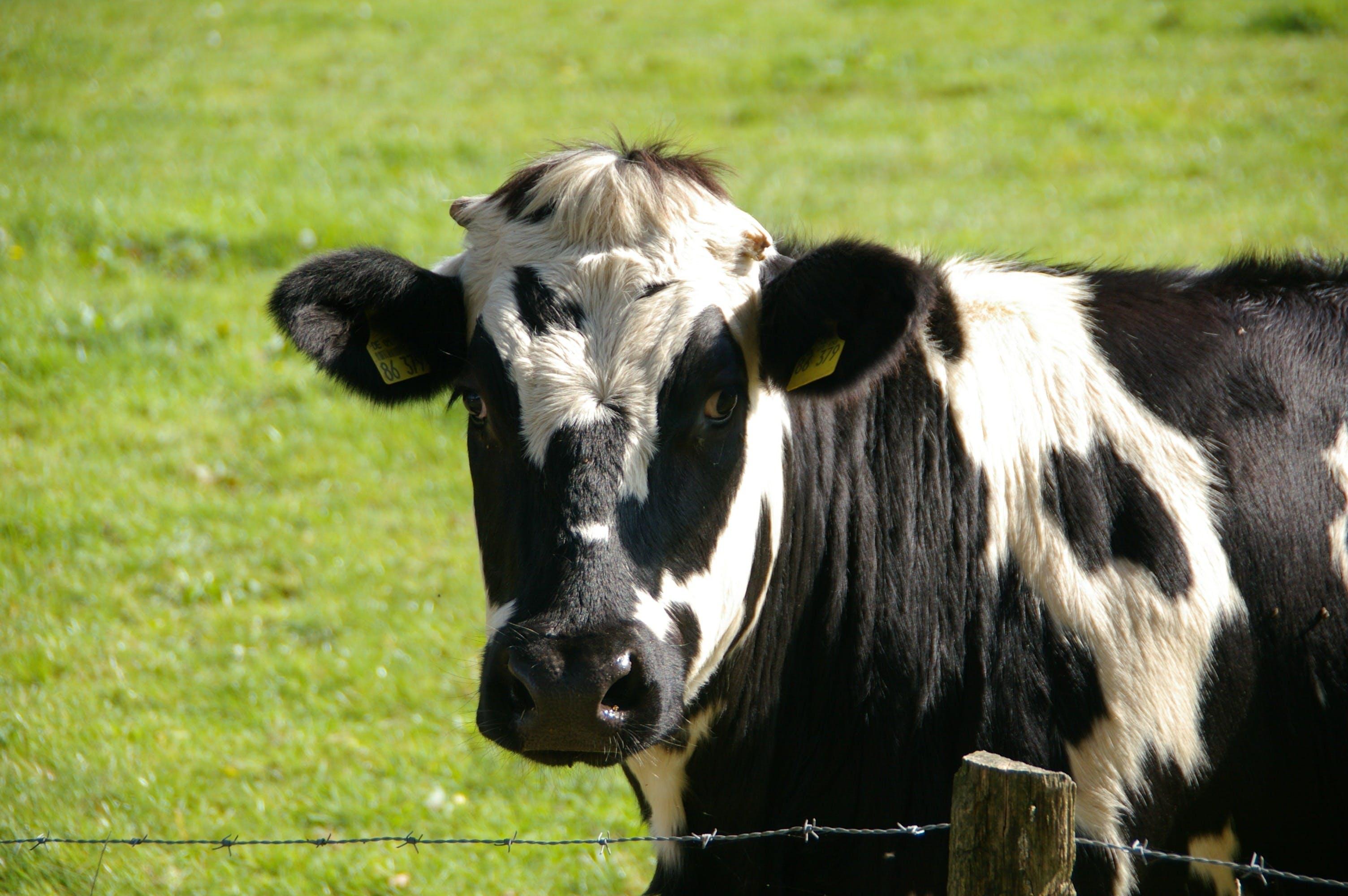 Gratis lagerfoto af close-up, dyr, dyrefotografering, fægte