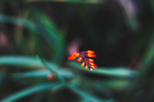 High angle of tiny flower with orange and purple petals growing against blurred green leaves in nature
