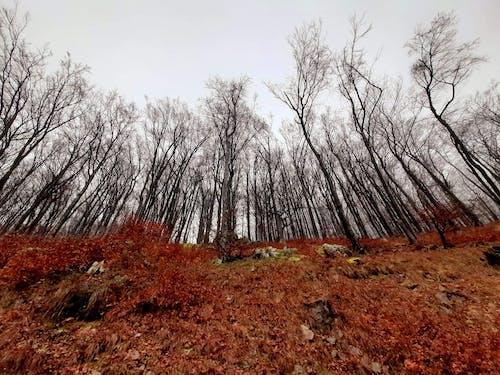 Ảnh lưu trữ miễn phí về atmosfera de outono, gỗ, màu mùa thu