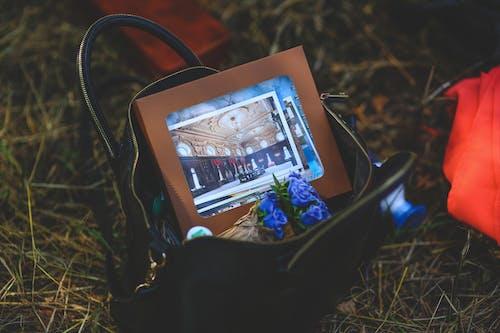 Gratis stockfoto met beeld, bloem, boom, computer