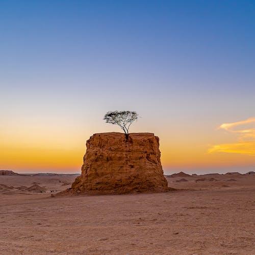 Tree growing on sandstone hill in desert at sundown