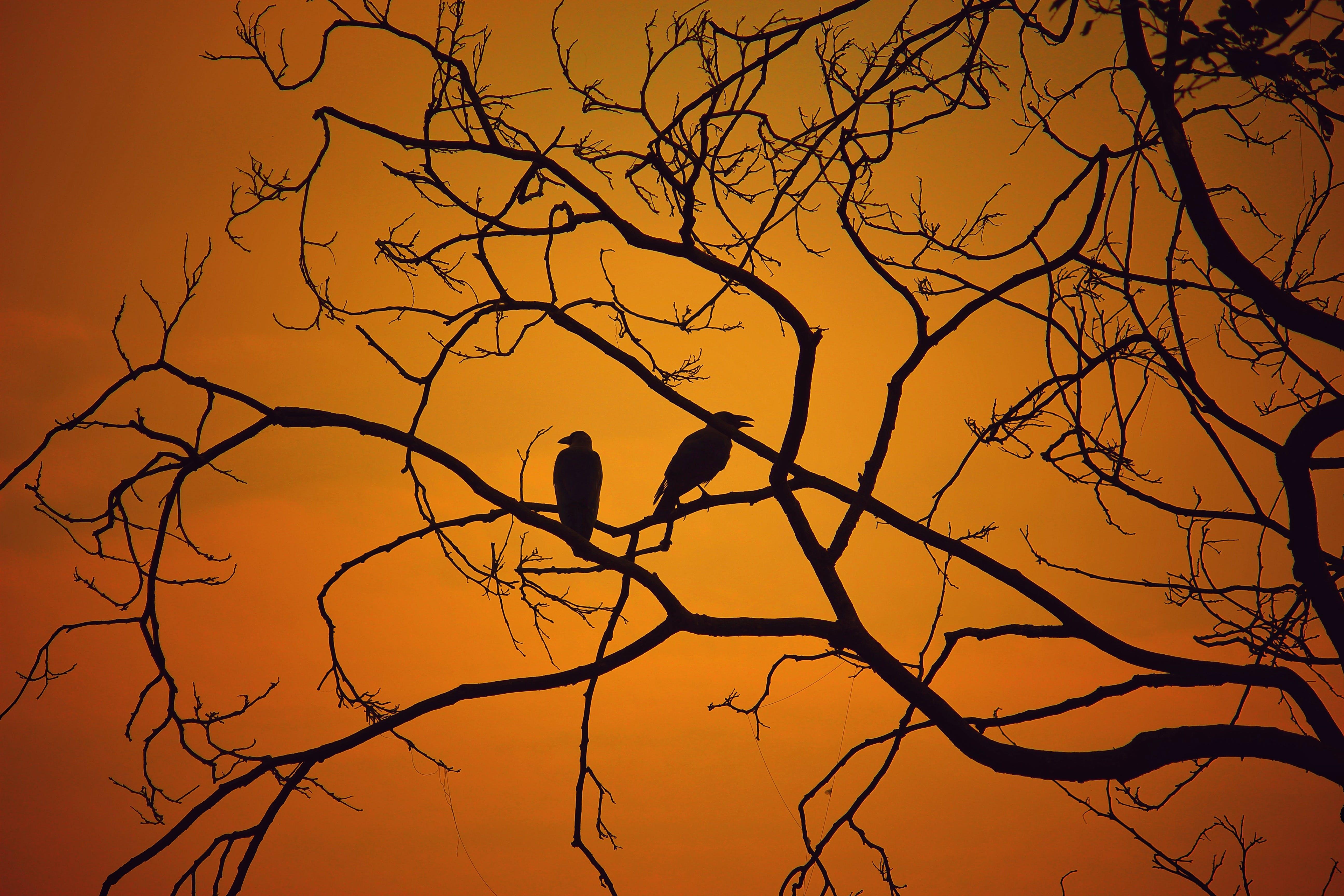 Imagine de stoc gratuită din apus, arbore, backlit, cer