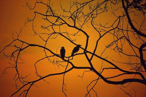 Ilmainen kuvapankkikuva tunnisteilla aamu, aavemainen, auringonlasku, auringonnousu