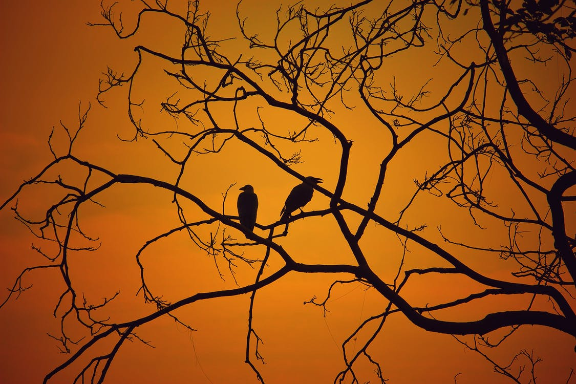 Silhouette Photography of Two Birds on Twig