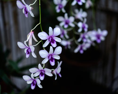 Bright purple orchid flowers with small tender petals growing on thin twigs in rural terrain on blurred background on summer day