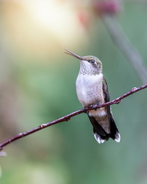 Small hummingbird with long beak sitting on thin branch of tree in sunny forest with green leaves on blurred background
