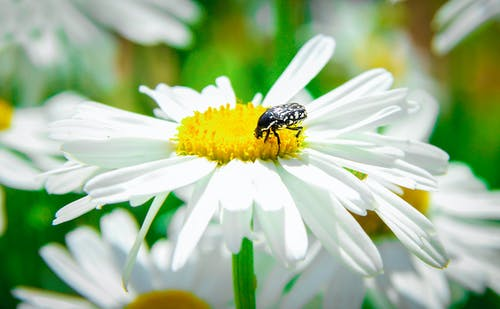 Free stock photo of arthropod, budapest, flower