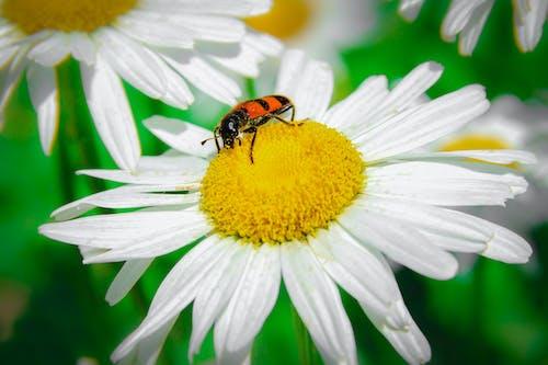 Free stock photo of arthropod, flower, flowering