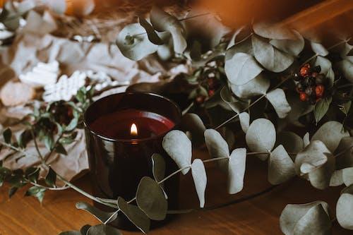 Photos gratuites de amour, automne, bois