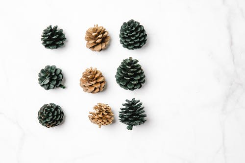 Top view of different natural dry pine cones in rows on smooth marble surface