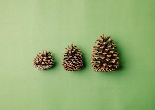 白色表面上的棕松果