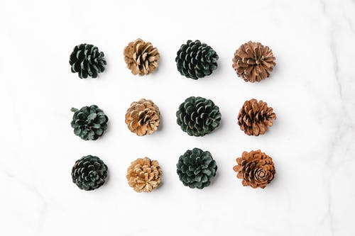 Various pine cones in rows on marble surface