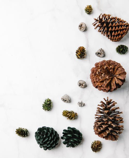 Collection of natural pine cones on white background