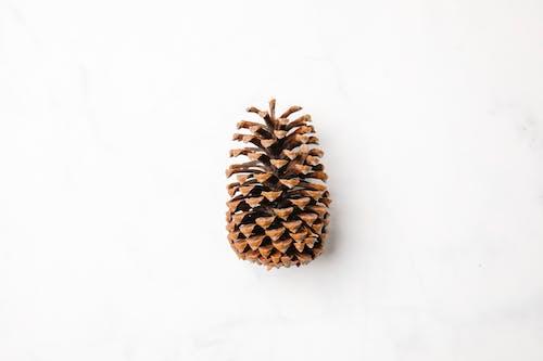 白い表面の茶色の松の円錐形