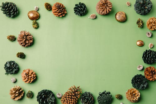 Top view of assorted coniferous tree cones with dry uneven surface and rounded scales forming frame