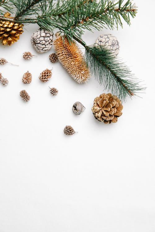 Top view of green coniferous twigs placed on white background with various pine cones during Christmas holiday celebration in studio