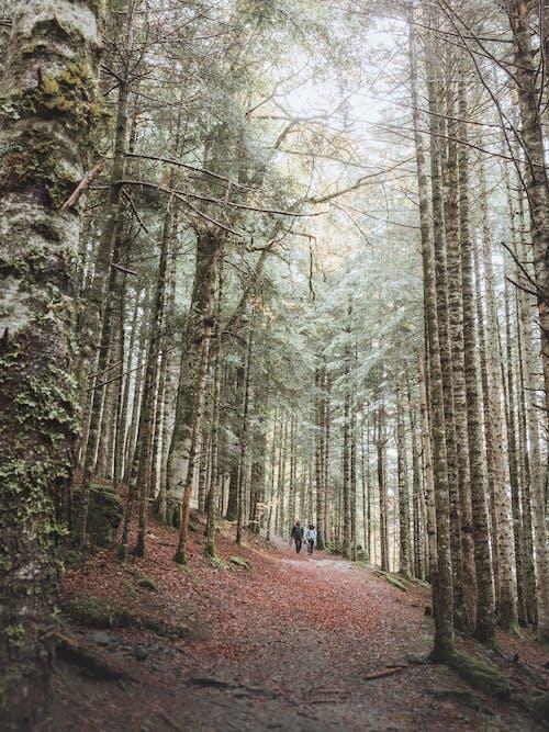 Foto stok gratis alam, batang pohon, berjalan