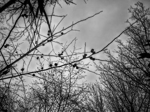 Free stock photo of bare trees, black and white background, branch