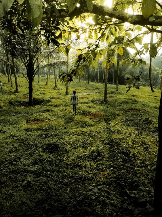 Person Walking on Green Grass Field Surrounded by Green Trees
