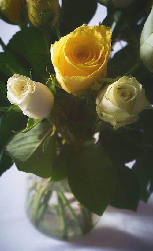 คลังภาพถ่ายฟรี ของ กลีบดอกไม้, การจัดดอกไม้, การตกแต่ง, การแต่งงาน
