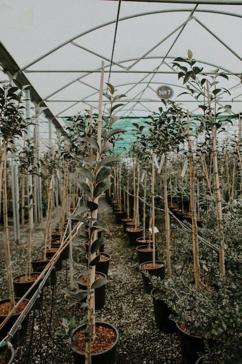 Photos gratuites de agriculture, aliments, arbre