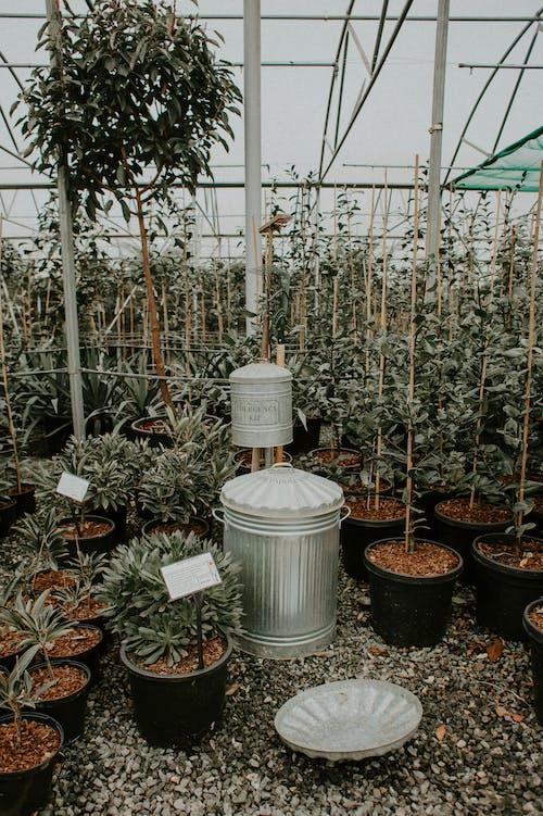Green Plants in White Plastic Bucket
