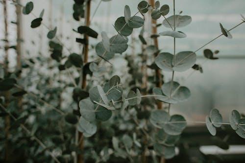 Photos gratuites de arbre, arbuste, branche