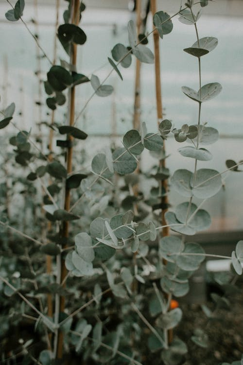 White and Green Plant